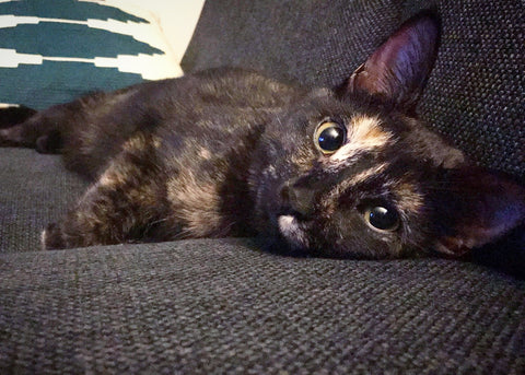 cute cat laying on couch eyes