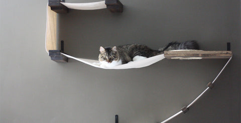 Cat Wall Shelving Vertical Space