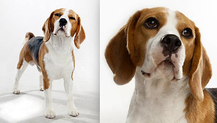 Handmade Beagle Face Necklace - CrazyPassionateAbout.com