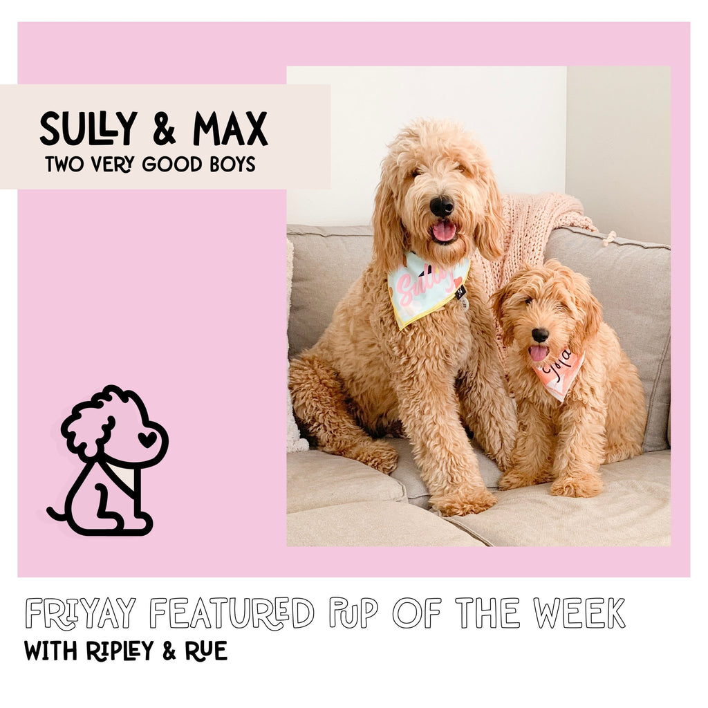 Caution!! Extreme Cuteness Ahead: Friyay Feature Sully & Max | Ripley & Rue