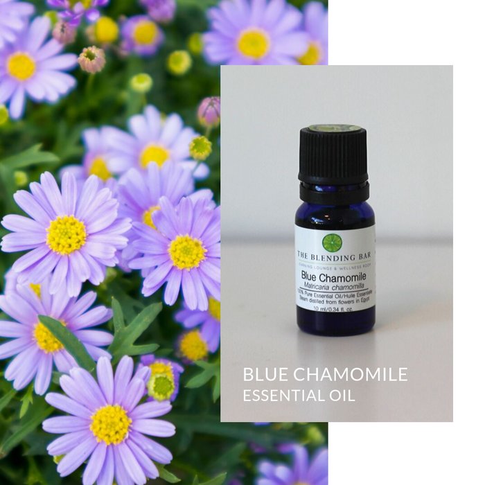 Chamomile, Blue Essential Oil | German Chamomile Essential Oil