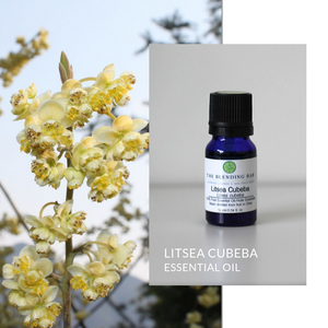 Litsea Cubeba Essential Oil