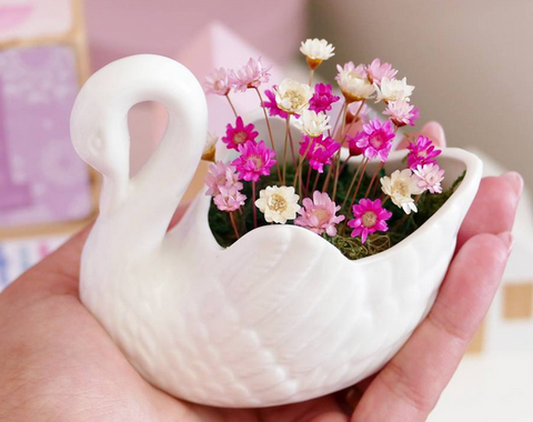 Swan Little Bloom Set