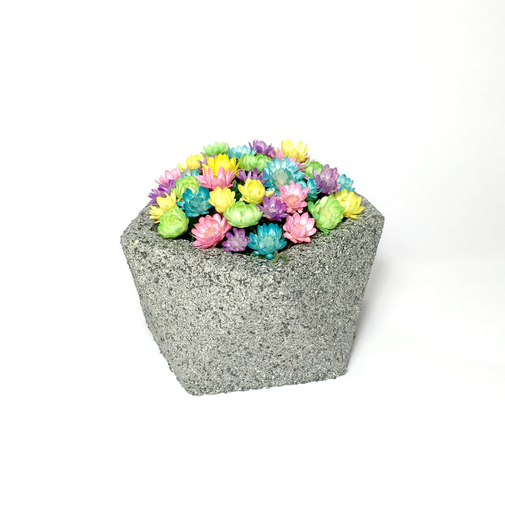 Concrete Planter Little Fairy Bloom set with real miniature flowers
