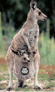 The Kangaroo and its pouch.