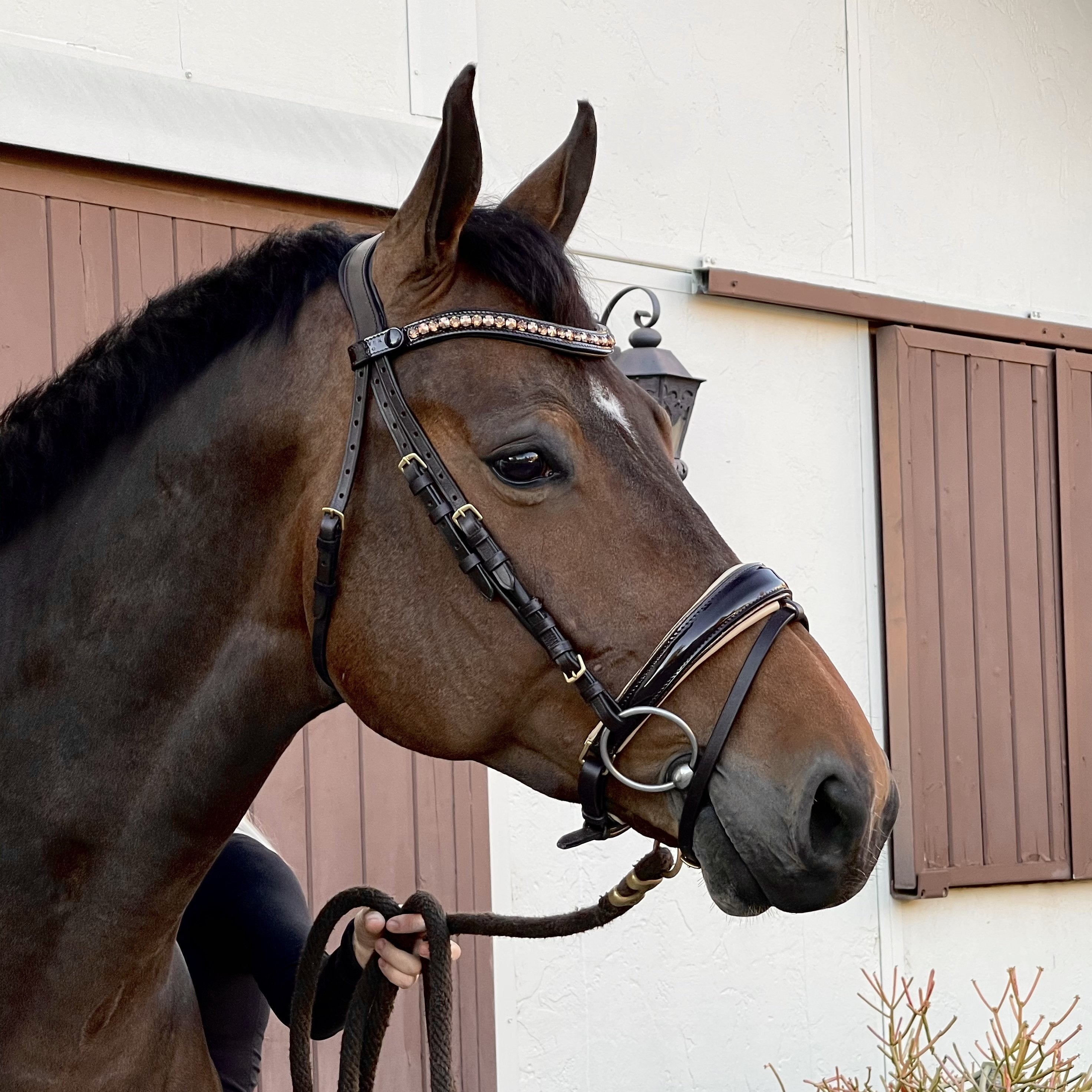 Gold Smile Brown Leather Bridle With Webb Leather Reins