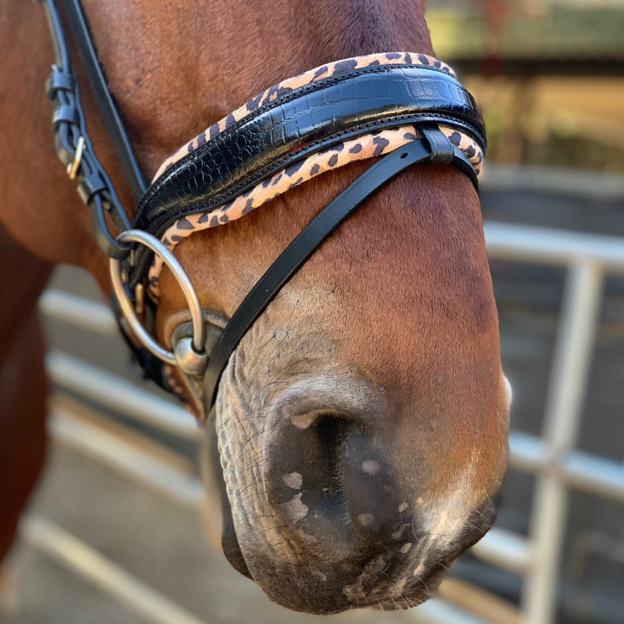New curvy Black and Golden Crystal Browband in Black and brown leather CLEARANCE