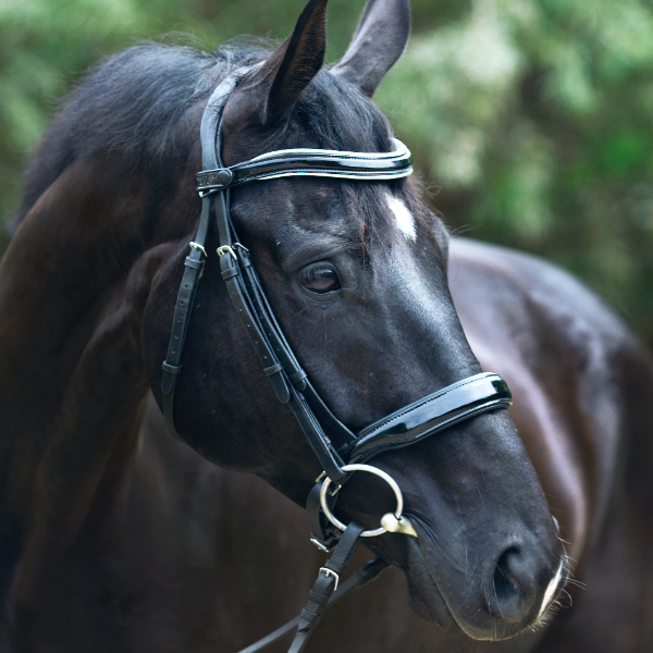 Halter Ego® 'Wellington' Black Patent Leather Snaffle Bridle Without Flash