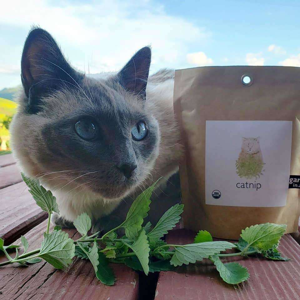 Potting Shed Creations - Garden in a Bag | Catnip