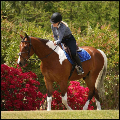 Luxe Jump Saddle Pad - Royal Blue