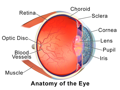 What is pterygium? Anatomy of the eye