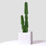 SOGA 95cm Green Artificial Indoor Cactus Tree Fake Plant Simulation Decorative 2 Heads
