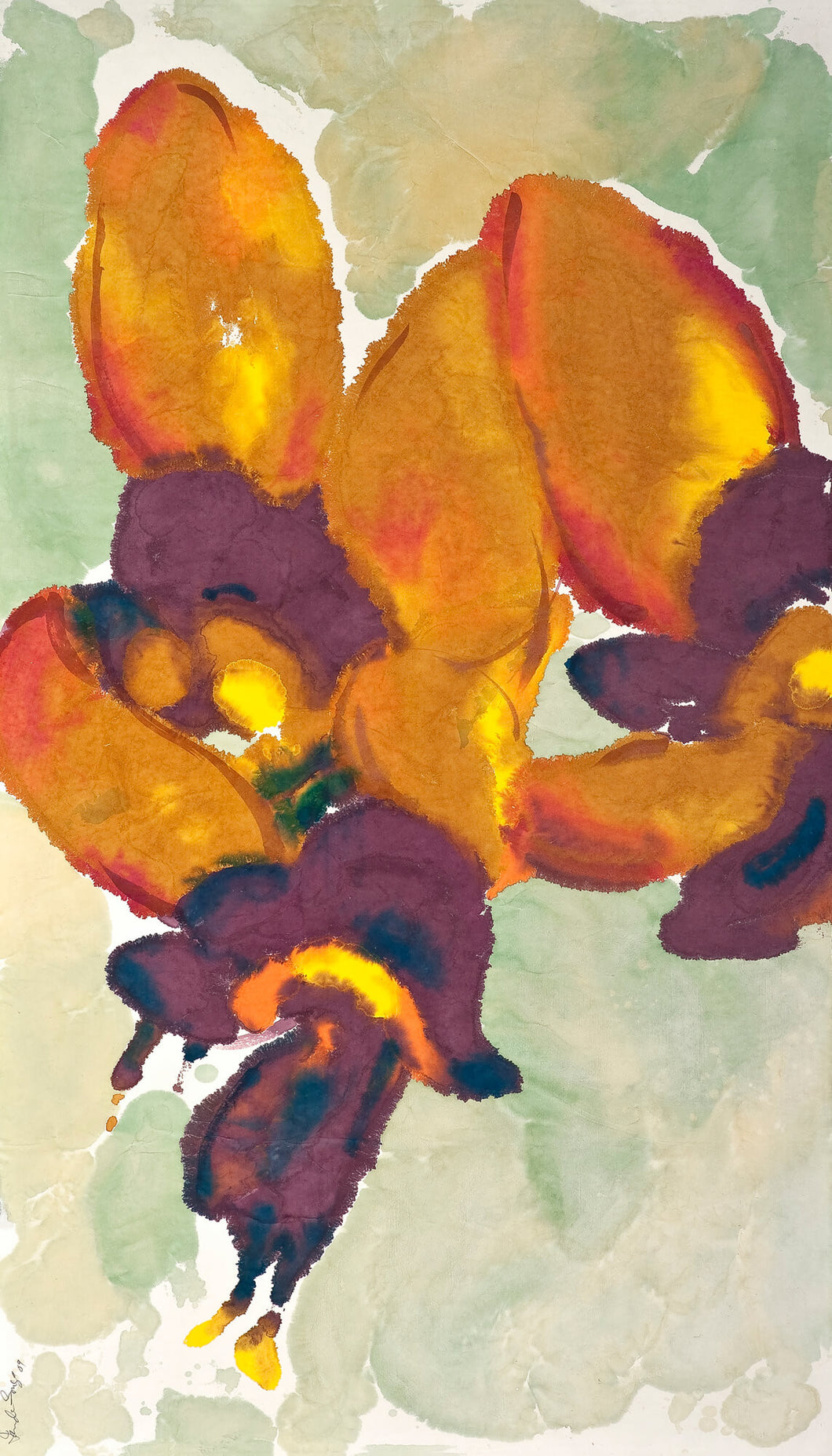 Diuris amplissima: Limited Edition Print
