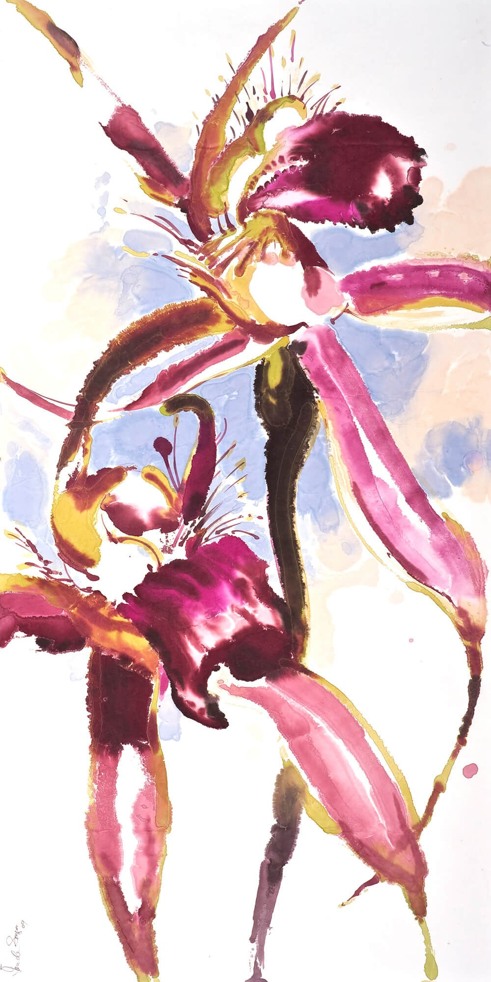 Caladenia brownii: Limited Edition Print