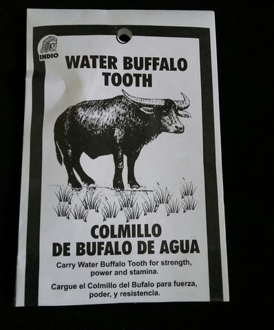 WATER BUFFALO TOOTH