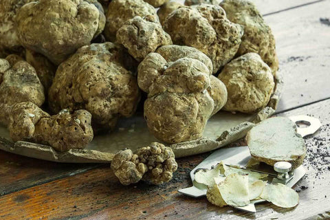 Truffle collection from the Marche Region