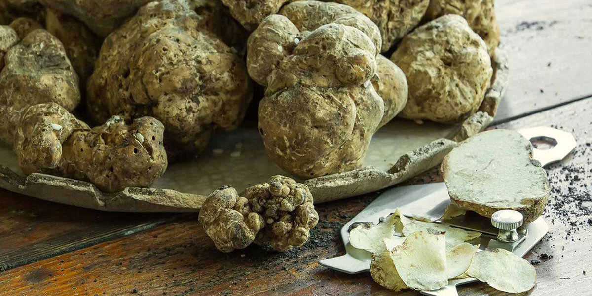 Truffle, preserved truffles, truffled products. White and black truffles. Made in Italy give taste to your recipes - Agrumia