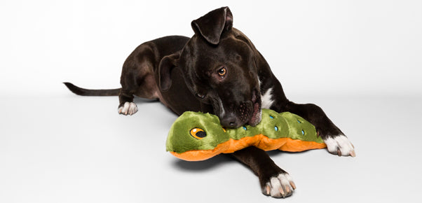 The Best Stuffed Chew Toy For A Dog... big or little