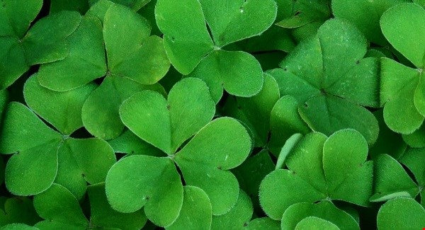 Oracal® 651 St. Patrick's Day Bundle