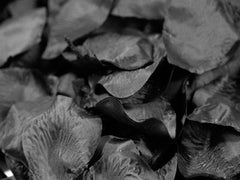 Silk Flower Petal Black ( 400 Petals )