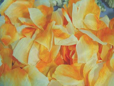 Silk Flower Petal Orange ( 400 Petals )