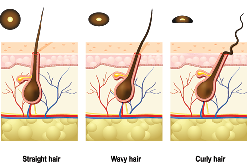 science behind the hair