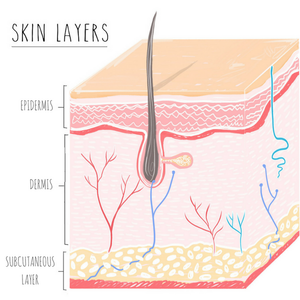 Crucial skin biology that every skincare user needs to know.