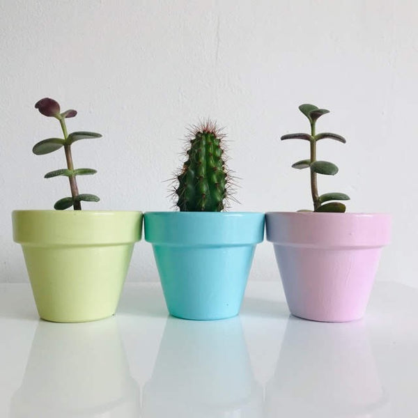 Pastel Chic Mini Terracotta Pots Set of 3 - Palm Pot & Peony