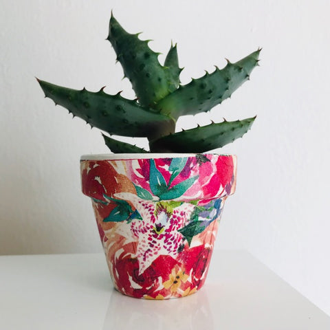 Festival Flowers Cactus Mini Pot - Palm Pot & Peony
