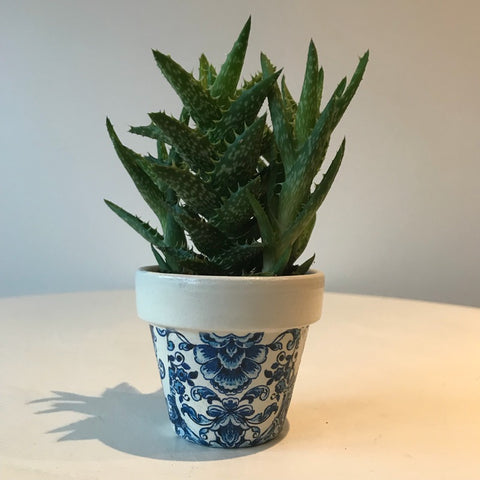 Blue and White Damask Cactus Mini Pot - Palm Pot & Peony