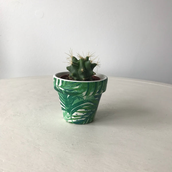 Tropical Palm Leaf Terracotta Cactus Succulent Pot 6cm