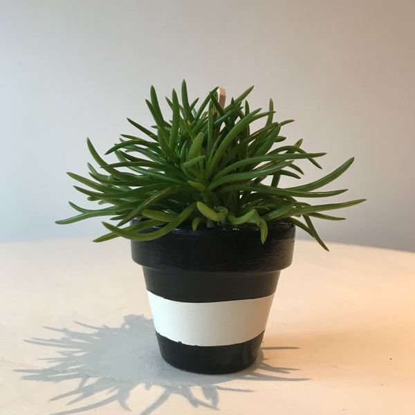 Black White Stripe Mini Pots Set of 3 - Palm Pot & Peony