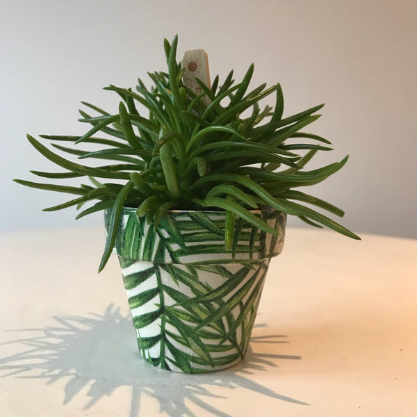 Green Palm Leaf Terracotta Mini Pot - Palm Pot & Peony