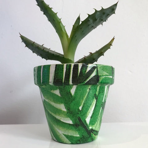 Green Palm Pine Leaf Plant Pot 11cm - Palm Pot & Peony