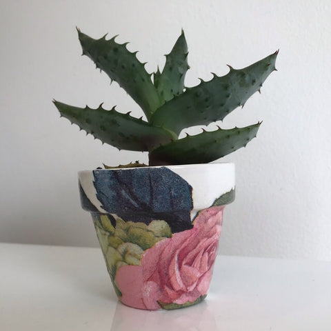 Antique Pink Rose Mini Cactus Pot 6cm - Palm Pot & Peony