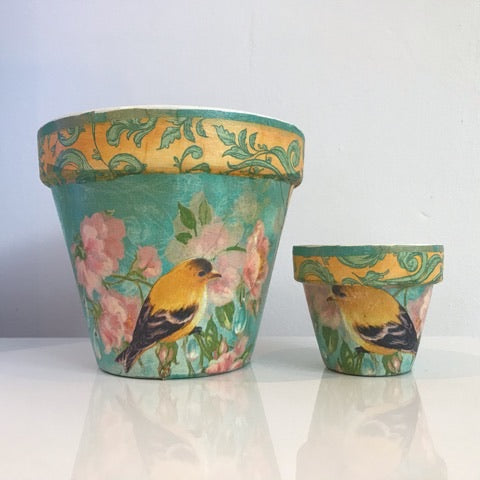 Turquoise and Yellow Birds Mini Cactus Pot 6cm - Palm Pot & Peony