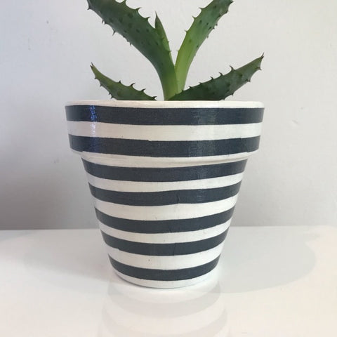 Dark Grey White Stripe Cactus Pot 11cm - Palm Pot & Peony