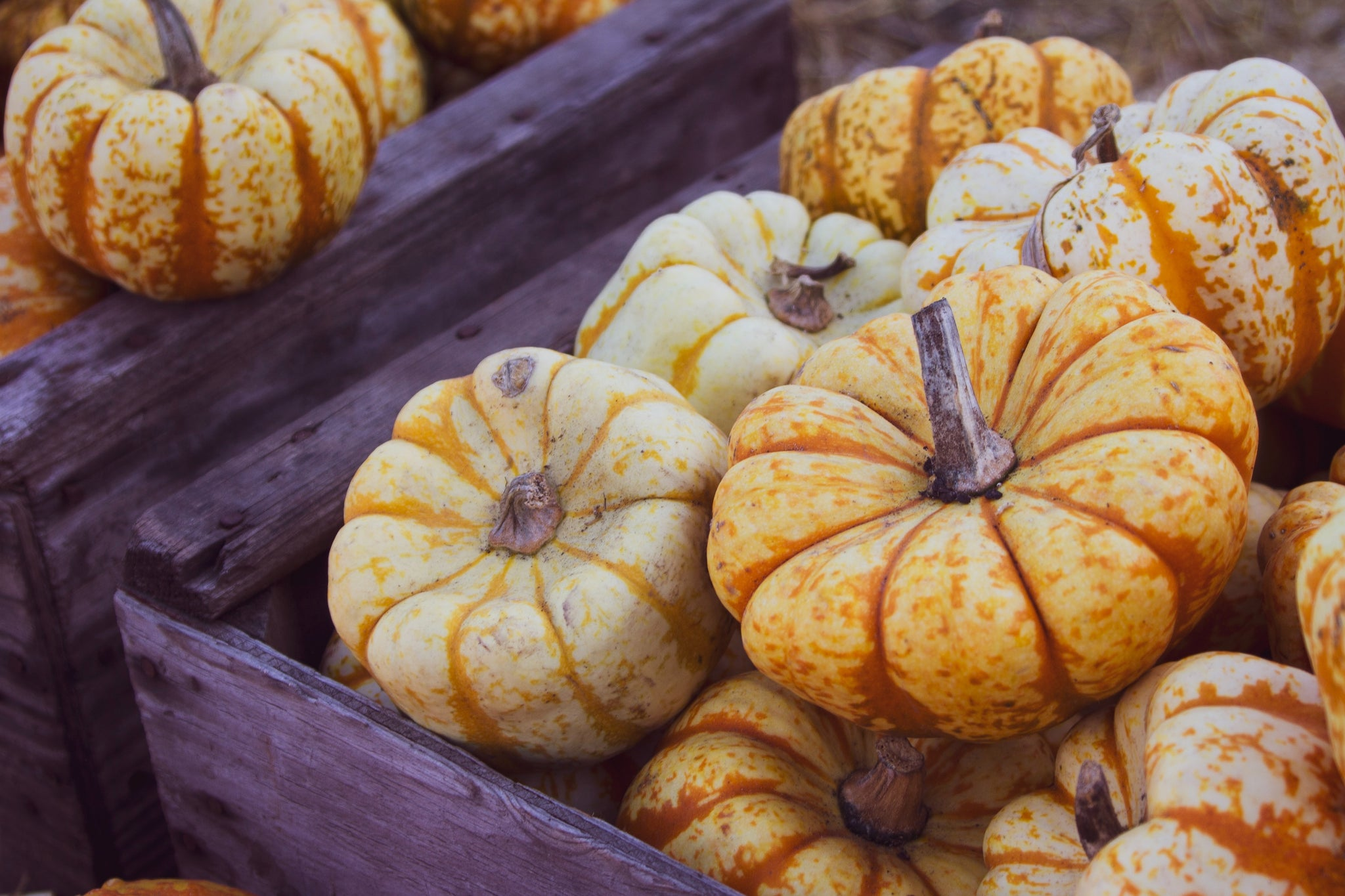 5 Fall Ingredients to Help You Combat Weather Change Sickness