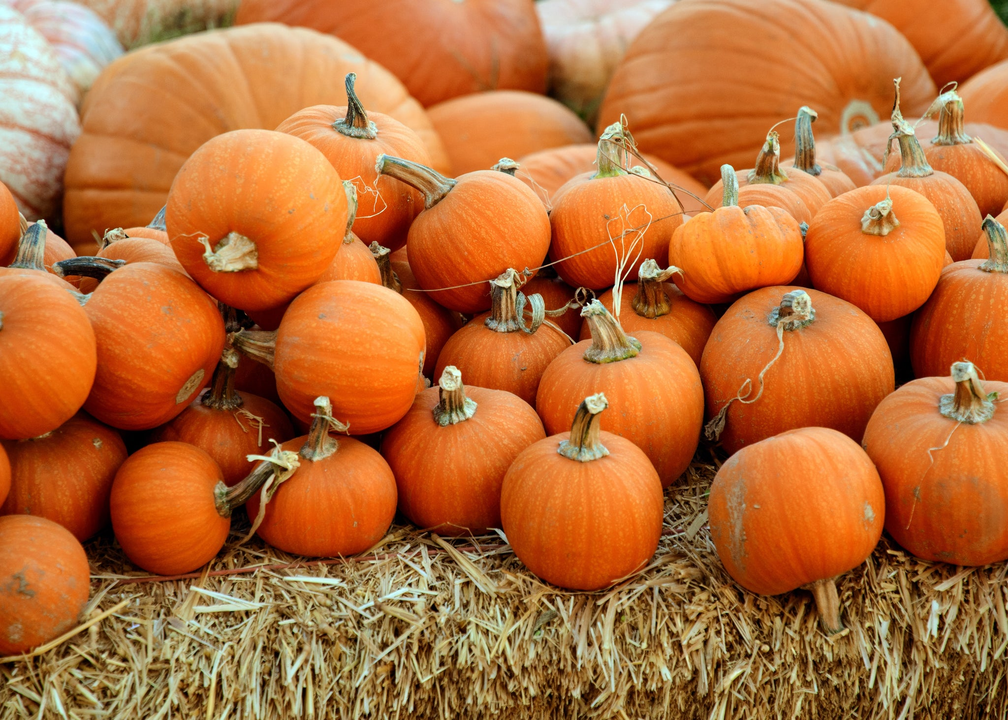 Pump Up Your Beauty Routine With Pumpkin