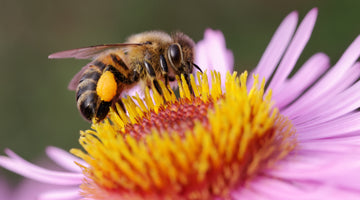 The Power of Bees: Scientific Benefits of Bee Propolis