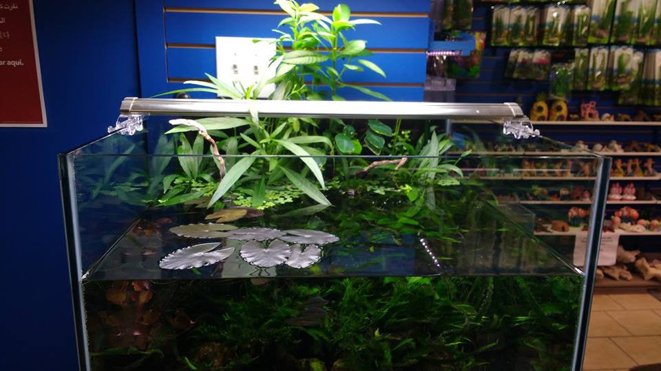 Swamp Tank: Happy Plants in the Riparium Setup at Fish Planet in Deerfield, Illinois