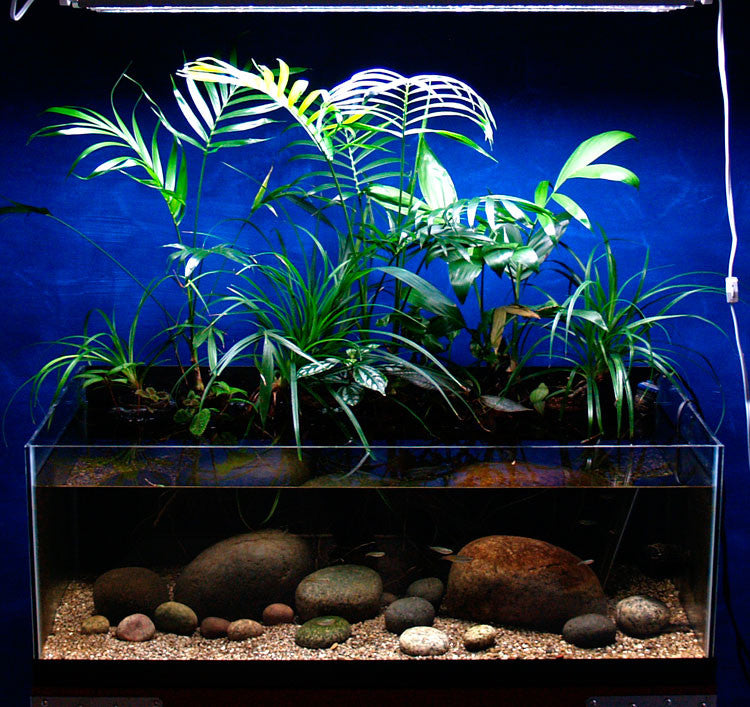 No extra CO2 Required!...And Other Reasons for a Planted Riparium as Your Next Aquascape.