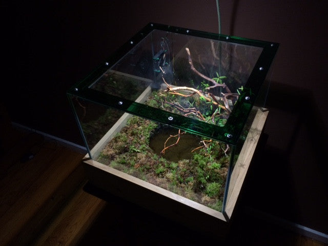 A Special Paludarium Build - Northern Acid Bog