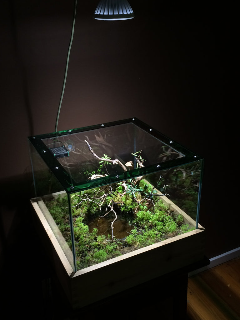 Growth Update: Acid Bog Paludarium