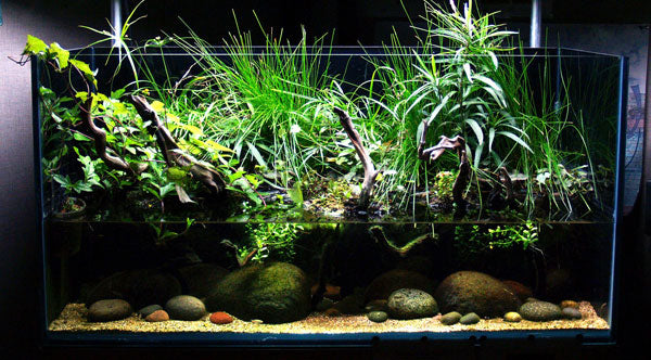120-gallon Mexico River Riparium