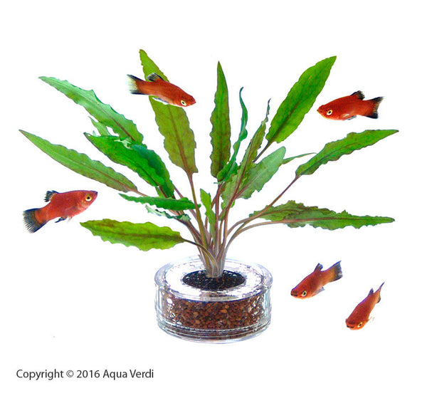 Tank Planters Foliage Kit 4-pack