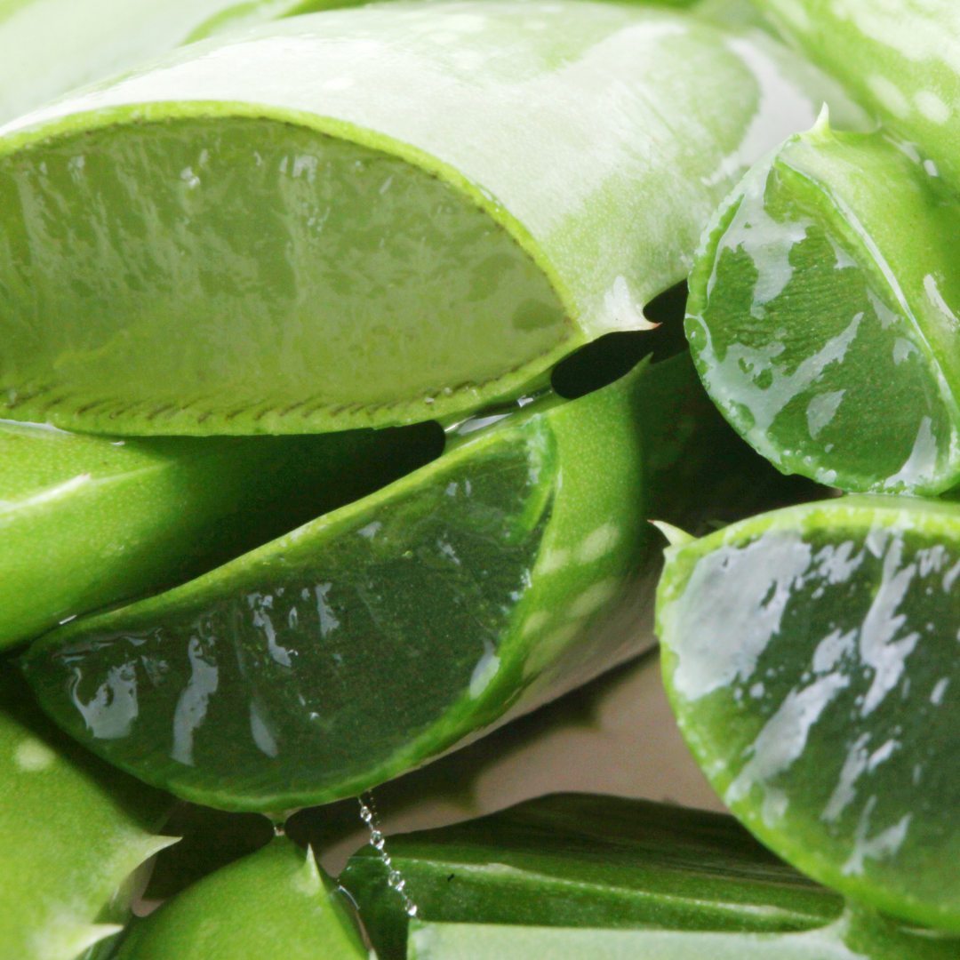 Everything You Need To Know About Aloe Vera