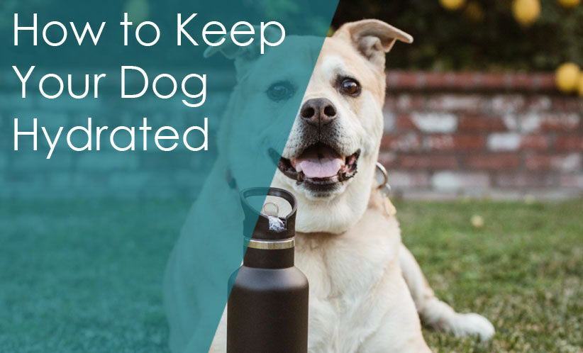 How to Keep Your Dog Hydrated