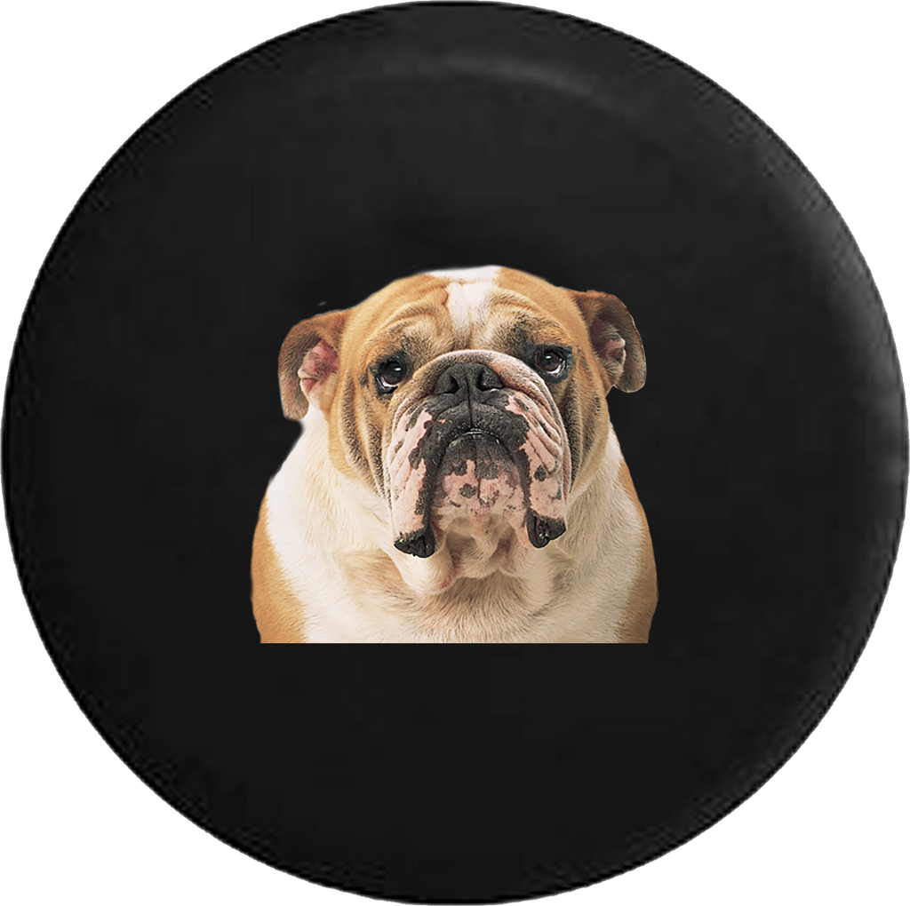 English Bulldog Bull Dog