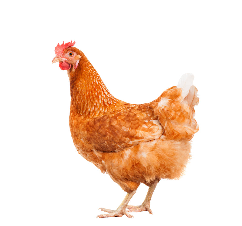 What Men Should Know About the Dangers of Chicken Legs